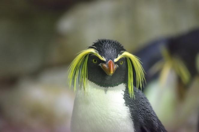 penguin-2104173_1920.jpg